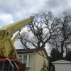 Oak reduction, Verwood