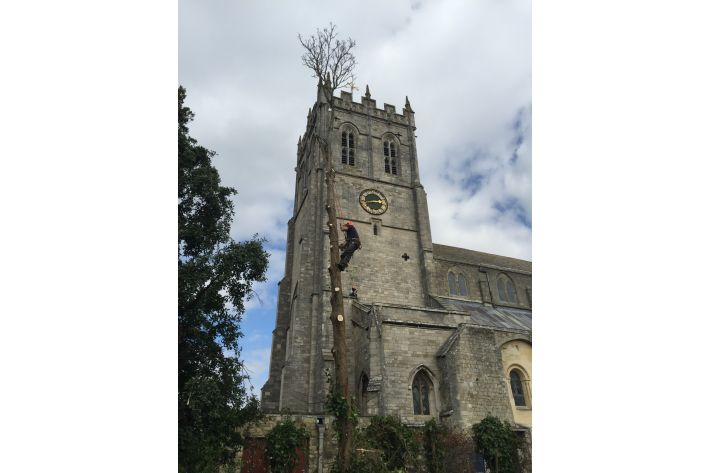 Tree Felling at The Priory, Christchurch