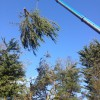 Crane removal of tree, Bransgore