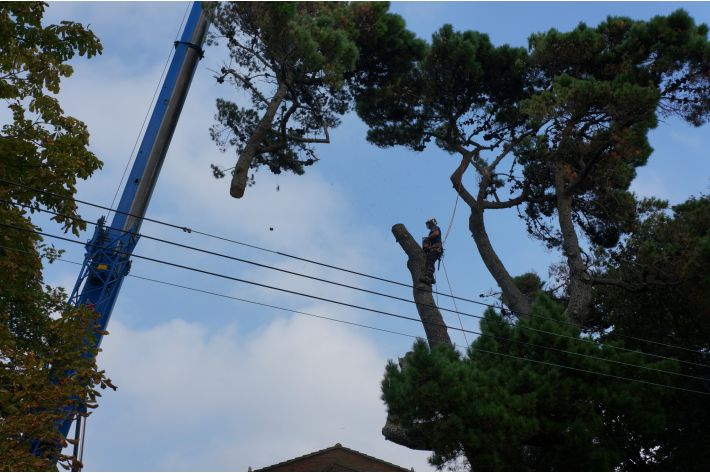 Crane removal of tree, New Milton