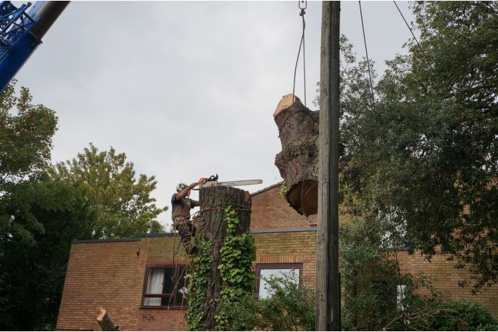 Tree removal by crane, New Milton