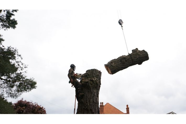Sectional felling in Southbourne, Bournemouth