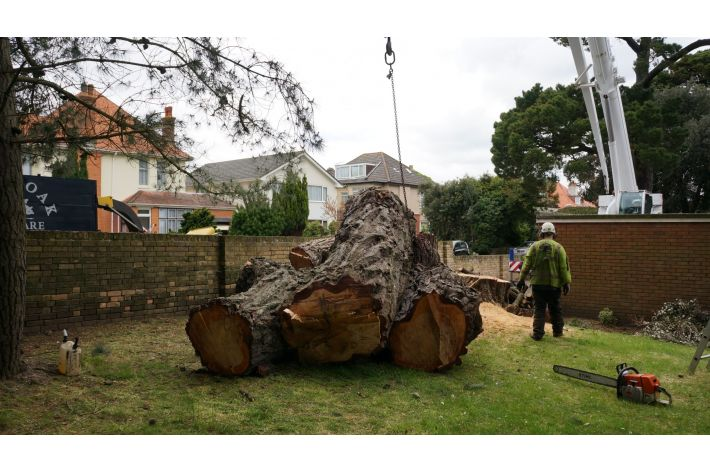 Large timber removal, Southbourne