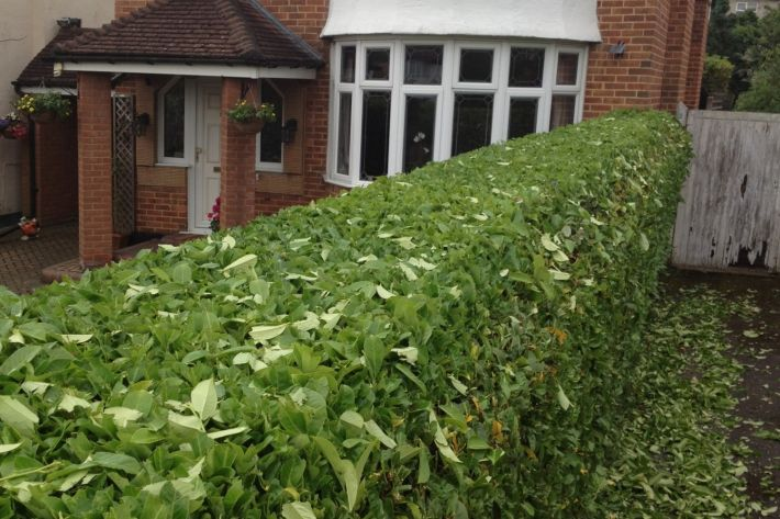 Hedge cutting in Bournemouth
