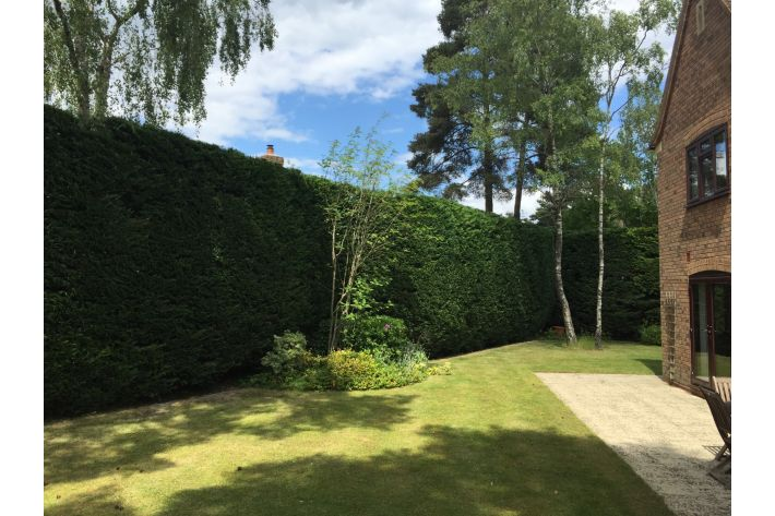 Reduction on a hedge in Ringwood