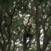 Tree pruning, Southampton