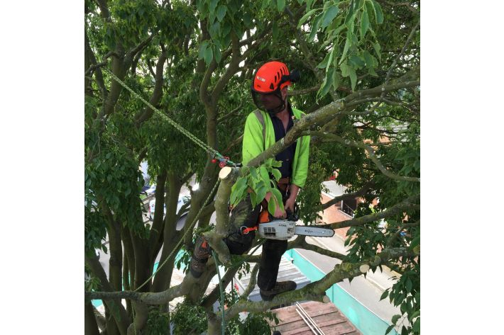 Tree pruning in Shirley, Southampton