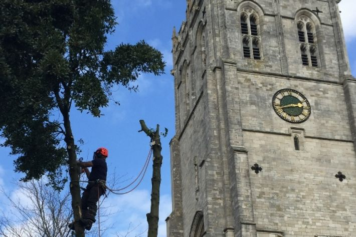 Tree Surgery, The Priory, Christchurch