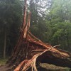 Storm damage, New Forest